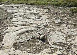 Во Франции нашли огромные следы динозавров