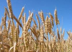 В сельское хозяйство нужно инвестировать $83 млрд