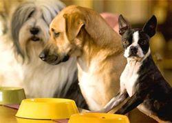 В Калифорнии открылся роскошный отель для собак