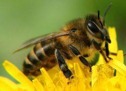 В Мехико на футболистов напали пчелы