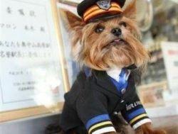 Японские собаки руководят ж/д станциями