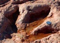 Самые маленькие следы динозавра нашли в Южной Корее