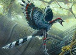 Первая на Земле птица оказалась динозавром