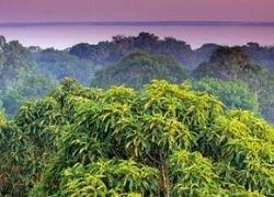 Самые дикие джунгли в мире