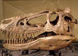 Треть известных видов динозавров предложили упразднить