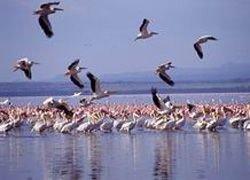 Озеро Чад вскоре пересохнет