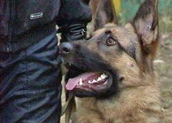 Жители Алтая получили реальные сроки за убийство собаки