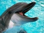 Дельфины играют в футбол медузами