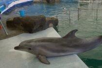 Уже второй дельфин умер в Московском дельфинарии