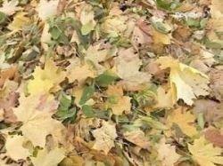 Уборка листьев вредит Москве?