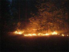 Крупный лесной пожар пытаются потушить в Грузии