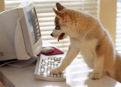 Служебных собак научили искать контрафактные диски