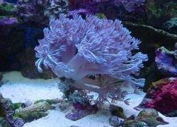 Коралловые рифы сохранят в банке
