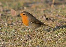 Ученые нашли у птиц компас