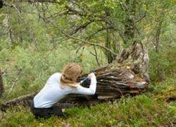 В Норвегии найдены деревья эпохи викингов