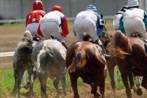Лошадей Рамзана Кадырова могут не пустить на скачки