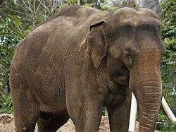 "Танзанийский слон убил сотрудника \""Би-Би-Си\"""