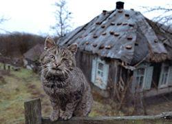 По цене московской квартиры можно купить целое село