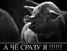 """В НАТО через \""""свинский\"""" грипп?"""