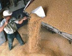 В России собрали более 100 миллионов тонн зерна