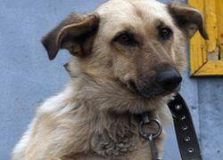 В России животные приравнены к неодушевленным предметам