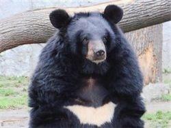 Кашмирский медведь ликвидировал двух боевиков