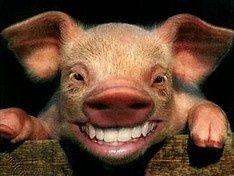 Истерика вокруг свиного гриппа на Украине зашкаливает