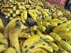 Эквадор обвинил Украину в завышении цен на бананы