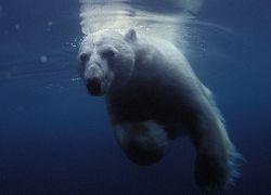 """США и Россию ждет \""""холодная война\"""" за ресурсы Арктики"""