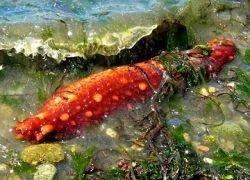 На дне Мирового океана начались масштабные изменения