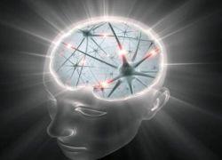 "В головном мозге нашли \""клетки времени\"""