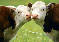КПРФ: сельское хозяйство - локомотив экономики
