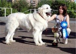 В Астрахани детей, страдающих ДЦП, лечат собаки