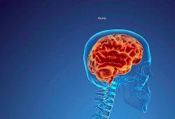 Ученые: справедливость является функцией мозга