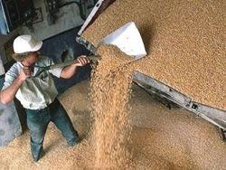 Сельхозпроизводство выросло РФ в 2009 году на 0,5%