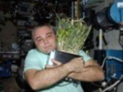 Контрабандная пшеница на МКС дала урожай