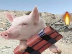 Скандал с британскими учеными: они взрывают свиней