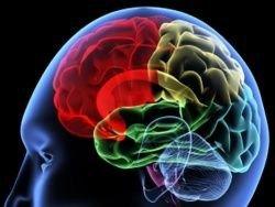 Ученые обнаружили сеть навигационных нейронов в мозге
