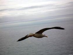 Учёные приоткрыли тайну птичьего полёта