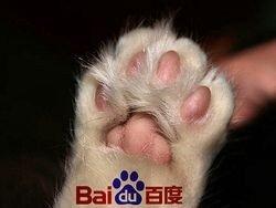 Поисковик КНР Baidu выиграл тяжбу с западными лейблами