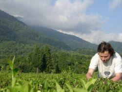 Абхазия готова дать на чай 100