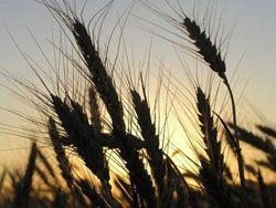 РФ скоро примет доктрину продовольственной безопасности