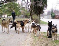 Бродячие собаки хулиганят в Болгарии