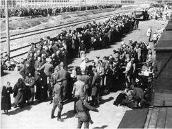 Освенцим. Секретные материалы