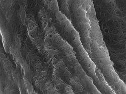 Физики предложили превратить одежду в батарею