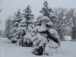 Новый год по-козелецки – елка с погоста