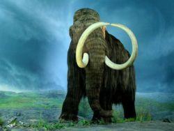 В Сибири началась охота на мамонтов