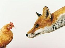 Разъяренные курицы убили лису