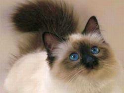 Новость на Newsland: Новые факты о том, как кошки лечат людей