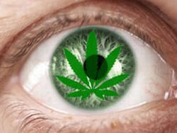 Марихуана лечит катаракту марихуана от язвы